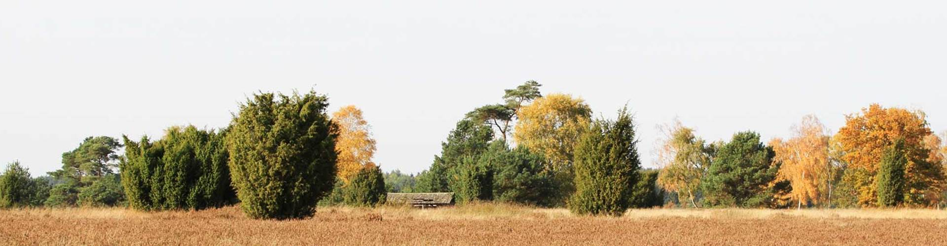 Heide im Herbst