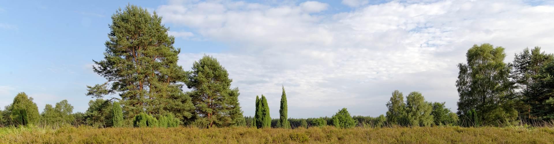 Heide im Sommer